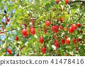 깜짝 구미의 열매 41478416
