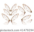 Insect cicada wing  isolated on white background 41479294
