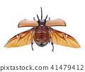 Rhinoceros beetle, Rhino beetle, , Unicorn beetle 41479412