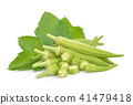 okra isolated on white background 41479418