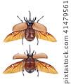 Rhinoceros beetle, Rhino beetle, Unicorn beetle 41479561