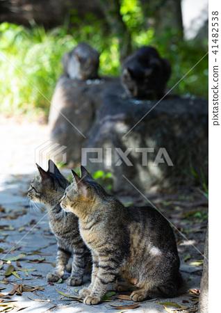 후 시미의 도둑 고양이 41482538