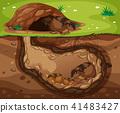 Guinea Pig Family Living Underground 41483427
