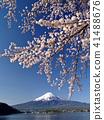 樱花盛开的河口湖 41488676