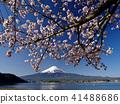 樱花盛开的河口湖 41488686