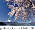 富士山 春天 春 41488692