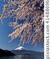 樱花盛开的河口湖 41488696