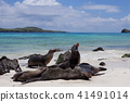 galapagos, islands, animal 41491014