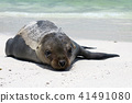 galapagos, islands, animal 41491080