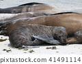 動物 哺乳動物 密封 41491114