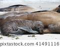 動物 哺乳動物 密封 41491116