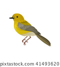 Detailed vector icon of yellow warbler. Small song bird with long tail and bright plumage 41493620
