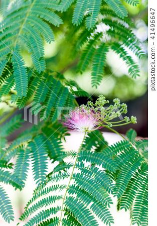 Joyful tree Nemuminoki Nemnokinem tree Together flower Nemu flower Nami flower 41496647