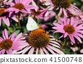 Butterfly 41500748