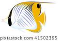 가시 나비 고기 흰색 배경 41502395