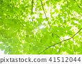 tender green, verdure, foliage 41512044