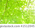 tender green, verdure, foliage 41512045