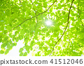 tender green, verdure, foliage 41512046