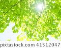 tender green, verdure, foliage 41512047