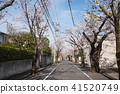 เดินโตเกียวเดิน Setagaya Ohanami ใกล้ Fukasawa เจ็ด chome 41520749
