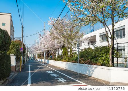 도쿄 산책 세타 가야 꽃놀이 산책 세타 잇 쵸메 세인트 메리 국제 학교의 벚꽃 41520776