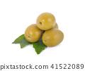 橄欖 綠色 綠 41522089