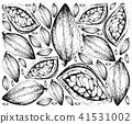Theobroma Cacao Fruits 41531002