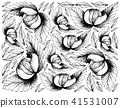 Hand Drawn Background of Fresh Dengen Fruits 41531007