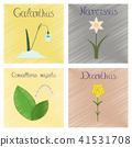 Convallaria Narcissus Dianthus Galanthus 41531708