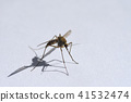 Insect drinking blood mosquito on white background 41532474