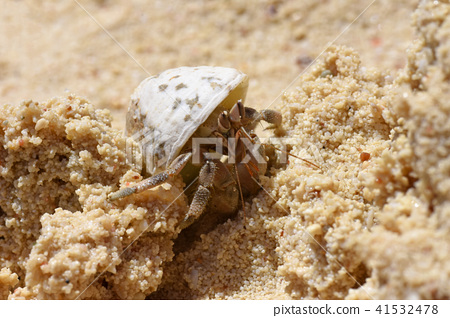 Crab hermit hides in the shell on the sea 41532478