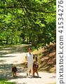ผู้หญิงคนหนึ่งเดินบนหมาที่สวนสาธารณะสีเขียวสด Bergian Shepherd 41534276