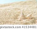 조개 산호 모래 41534481