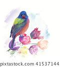 Painted Bunting bird 41537144