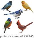 Birds set watercolor painting 41537145