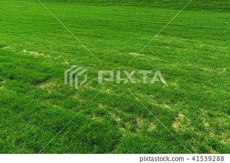 草地 草坪 绿色 41539288