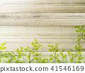 葉子和牆壁 41546169