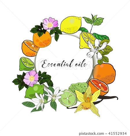 Vector drawn essential oils design banner. Package design idea. Mint, rose hips, jasmine, vanilla 41552934