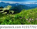 고산 식물, 산, 풍경 41557702