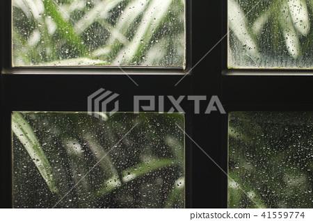 透過木窗的玻璃看窗外植物,雨天的背景圖 41559774