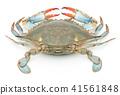 Blue-bean (♀): blue crab (female) 41561848
