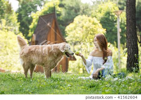 젊은여자, 개, 강아지, 애완동물, 골든 리트리버 41562604