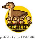 斑嘴鸭 育儿 贴纸 41563504