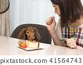 迷你臘腸犬和雌性 41564743