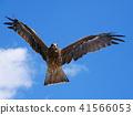 野生鸟类 野鸟 鸟儿 41566053