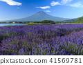 富士山 熏衣草 薰衣草 41569781