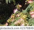 我能够拍摄花朵的照片 41570846