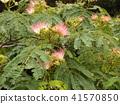 我能够拍摄花朵的照片 41570850