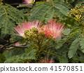 我能够拍摄花朵的照片 41570851