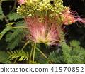 我能够拍摄花朵的照片 41570852
